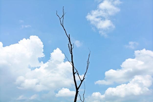夏の雲と青い空に枯れ木の枝