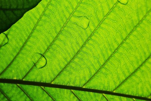 完璧な緑の葉のパターン - クローズアップ
