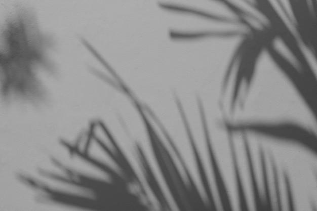 Тень пальмового листа на белой бетонной стене