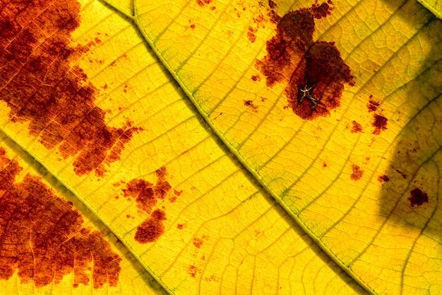 クローズアップ完璧な黄色とオレンジ色の葉の質感