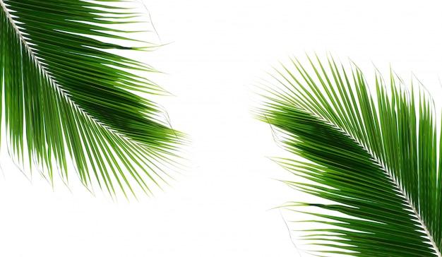 Близнецы пальмовые листья кокоса на белом фоне