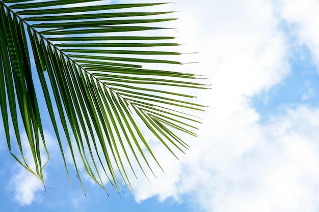 Кокосовые листья пальмы на голубом небе