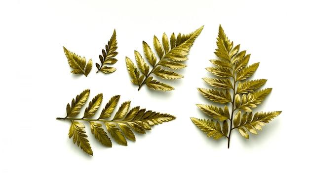 黄金のシダの葉の白い背景で隔離されました。