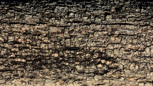 茶色の木の樹皮のテクスチャー