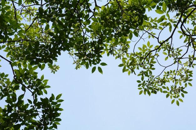 青い空を背景に緑の葉の木
