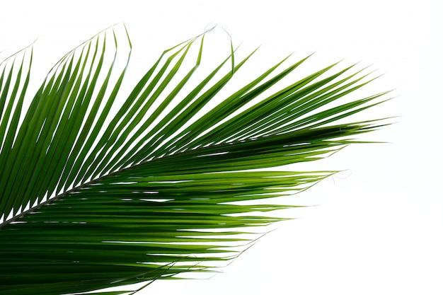 Пальмовые листья на белом фоне