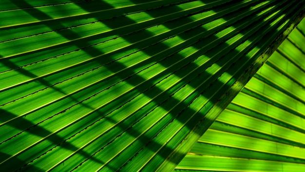 Линии и текстуры зеленых пальмовых листьев с тенью