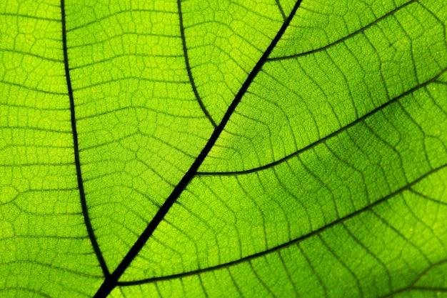 完璧な緑の葉の模様
