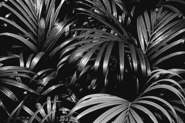Пальмовые листья узоры в тропических лесах - монохромный, свет и тень