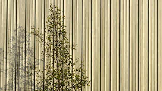 木の枝と朝の金属板の壁に影。