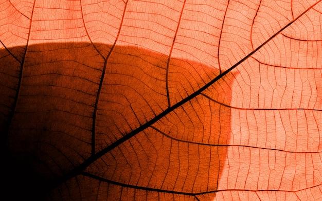オレンジ色の葉のテクスチャです。