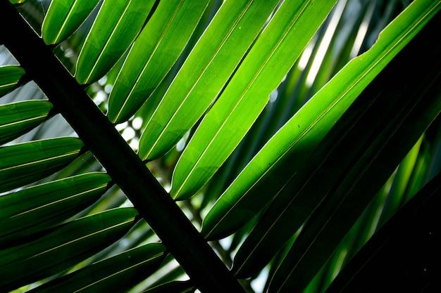 Пальмовые листья крупным планом