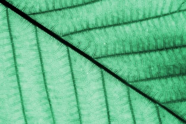 クローズアップの完璧な緑の葉のパターン