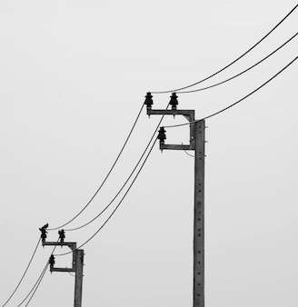 白い背景の上の鳥と電気ポスト