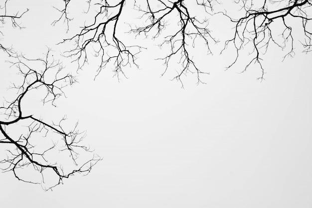 白で隔離される葉のない木のシルエット
