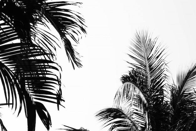 Крупным планом пальмовых листьев