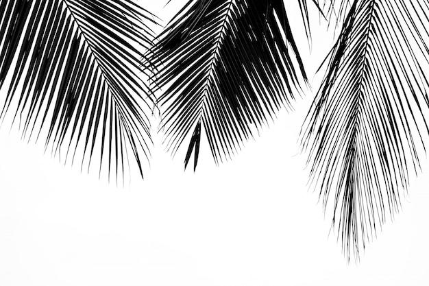 Крупным планом пальмовых листьев - монохромный
