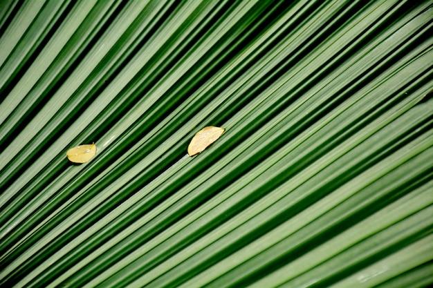 緑のヤシの葉とテクスチャー