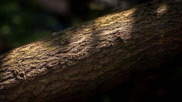 森の中の大きな木の茶色の木の樹皮のテクスチャー。