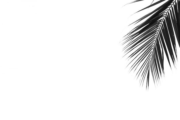 Крупным планом пальмовых листьев на белом фоне - монохромный