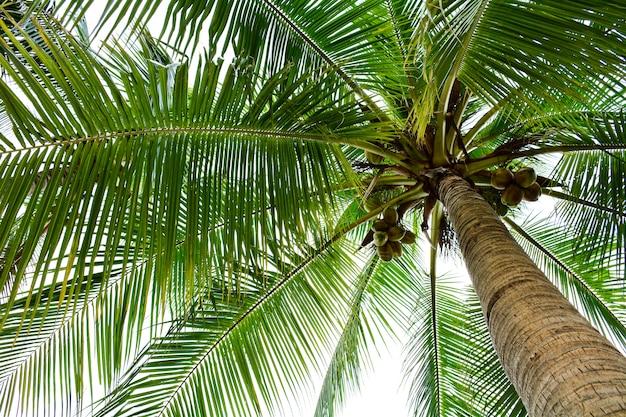 Красивая пальма
