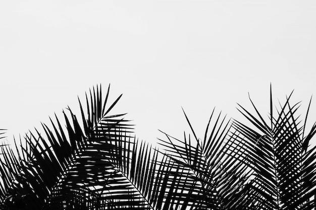 Пальмовые листья, изолированные на бледно-белом фоне