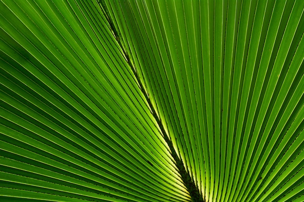 Линии и текстуры зеленых пальмовых листьев