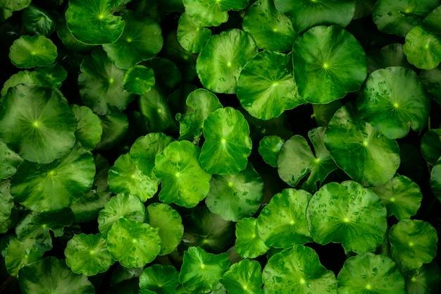 美しい緑の葉の背景