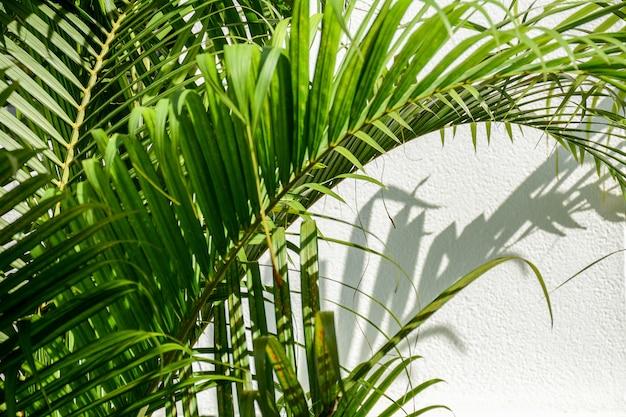白いコンクリートの壁にヤシの葉の影