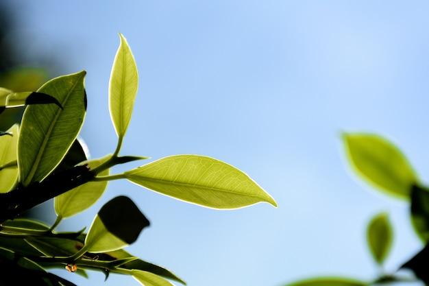 緑の葉と森の中の枝