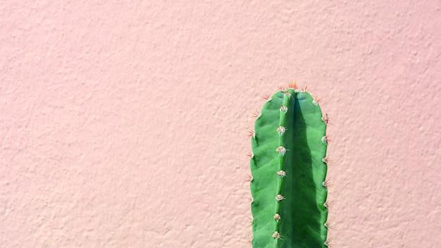 緑のサボテンの植物の前にピンクのセメントの壁