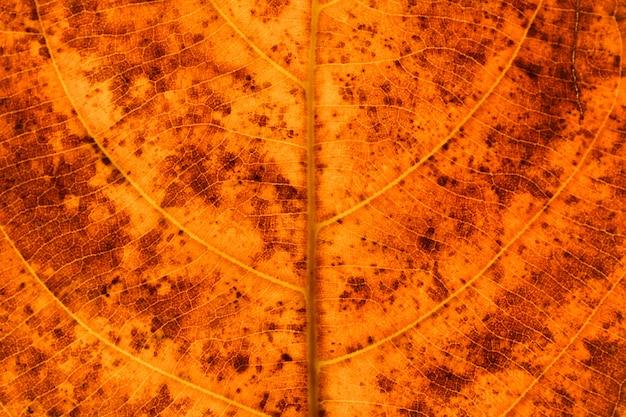 テクスチャとオレンジの乾燥葉 - 背景の詳細