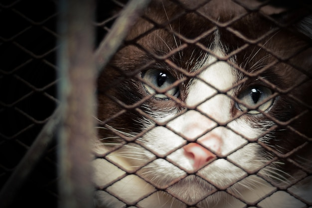 金属製のケージで孤独な猫