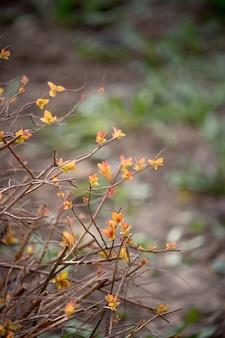 黄色と赤の葉を持つバージョンブッシュ