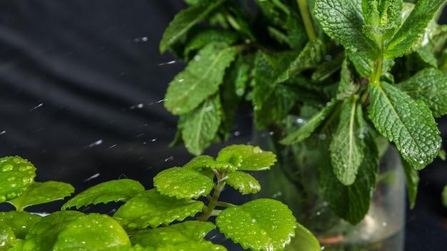 Капли воды на листьях зеленых растений в течение всего года