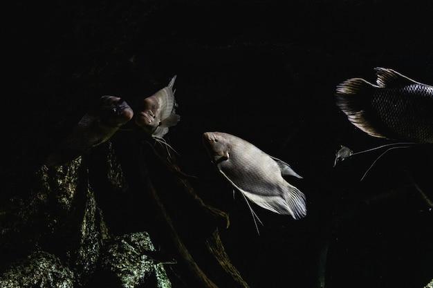 光が水を横切って海の暗闇の中で魚