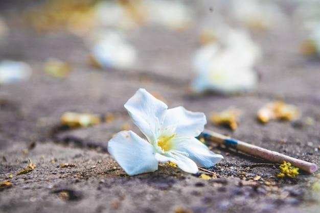 街の灰色の土に落ちた花