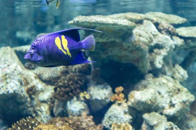 水族館の塩水の色の美しい熱帯魚