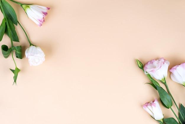 咲くピンクのトルコギキョウ、フラットレイアウトで作られた中央の空スペースでフレーム構成。ベージュ色の背景に花の装飾的なコーナー。