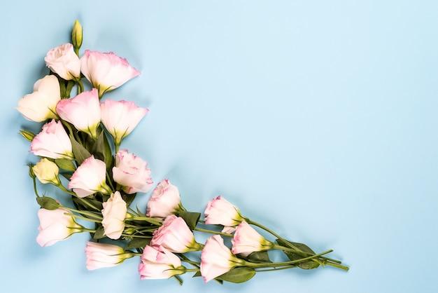 咲くピンクのトルコギキョウ、フラットレイアウトで作られた中央の空スペースでフレーム構成。青色の背景に花の装飾的なコーナー。
