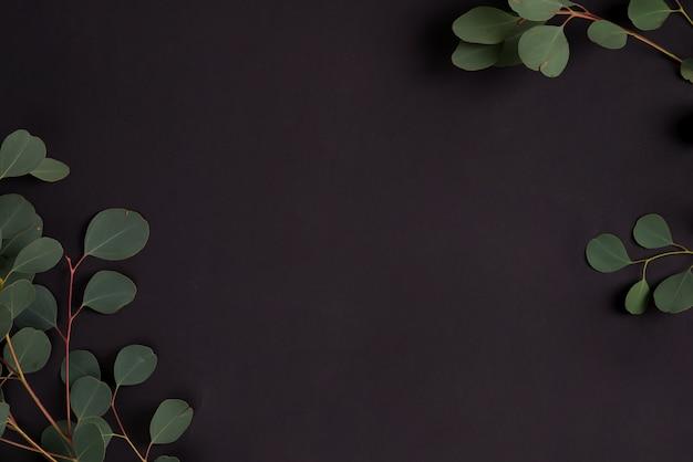 黒の背景にユーカリ植物の新鮮な自然の枝。挨拶構成の自然な背景。