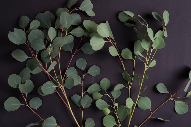 ユーカリ植物の新鮮な自然の枝が黒い表面に。挨拶構成の自然な背景。