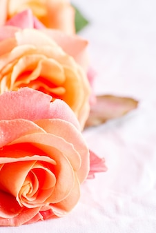 花びらに水の滴を新鮮な天然のバラの花のマクロの表示から装飾的なお祭りの背景。