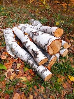 砕いたキノコと乾燥した葉から秋の森に大きな木製の葉がある風景