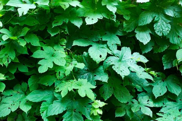 小さな緑の葉の背景。