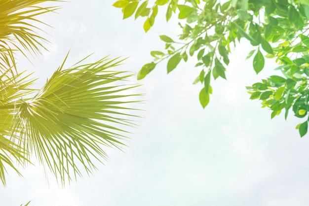 日光とヤシの葉の背景