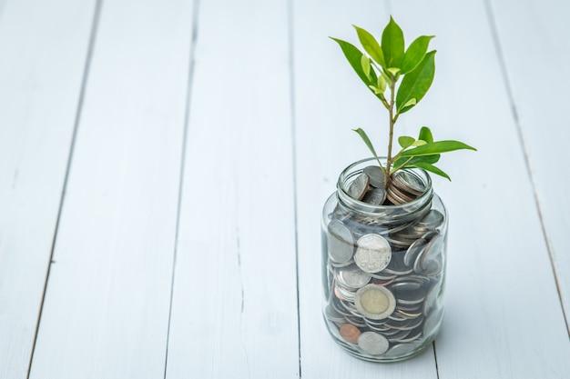 お金の成長のシンボル、コインとガラス瓶の中の若い木の植物