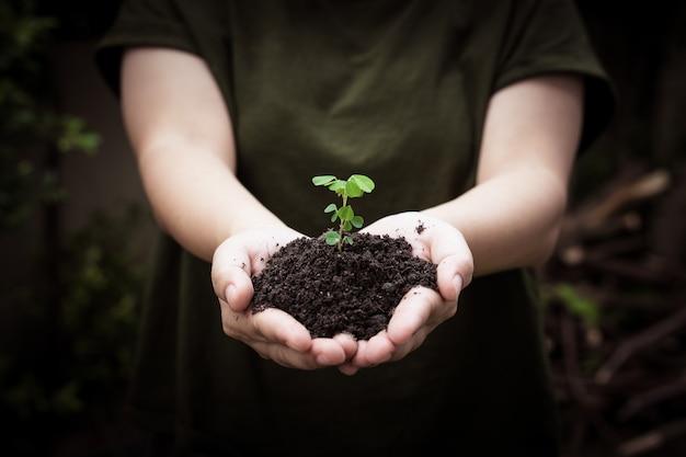 Руки держат почву с посадки молодых деревьев, идут зеленые символы