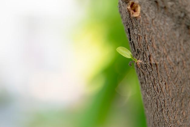 木から育った若葉