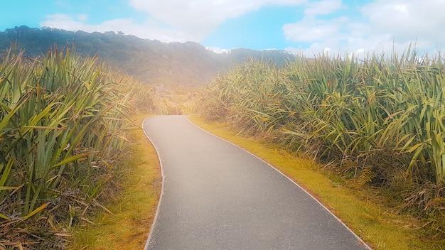 緑の自然な景観と成功への道。